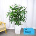 棕竹【白方形陶瓷盆】