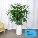 棕竹【白螺纹陶瓷盆】