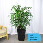 棕竹【黑方形陶瓷盆】
