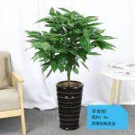 平安樹【黑螺紋陶瓷盆】