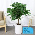 平安樹【白陶瓷盆】