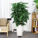 幸福樹 白陶瓷盆1.5m